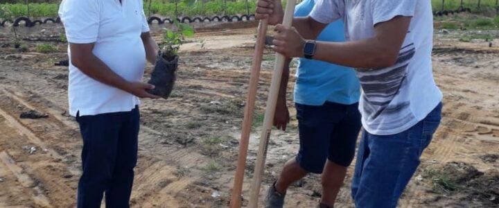 Secretaria do Meio Ambiente realiza plantação de mudas para o paisagismo do antigo lixão